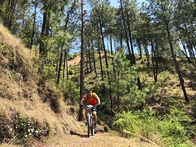 Shimla: Cyclist in action as he takes part in 8th edition of Hero MTB Himalaya Shimla 2019, in Shimla, on April 21, 2019. (Photo: IANS)