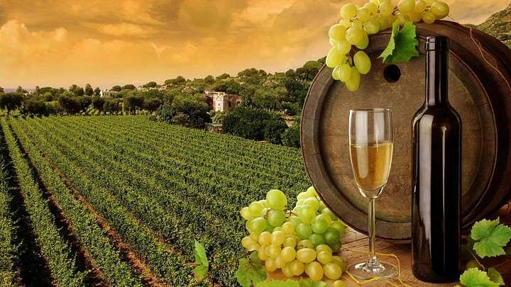 Take tours at the Vineyards of Sula in Nashik