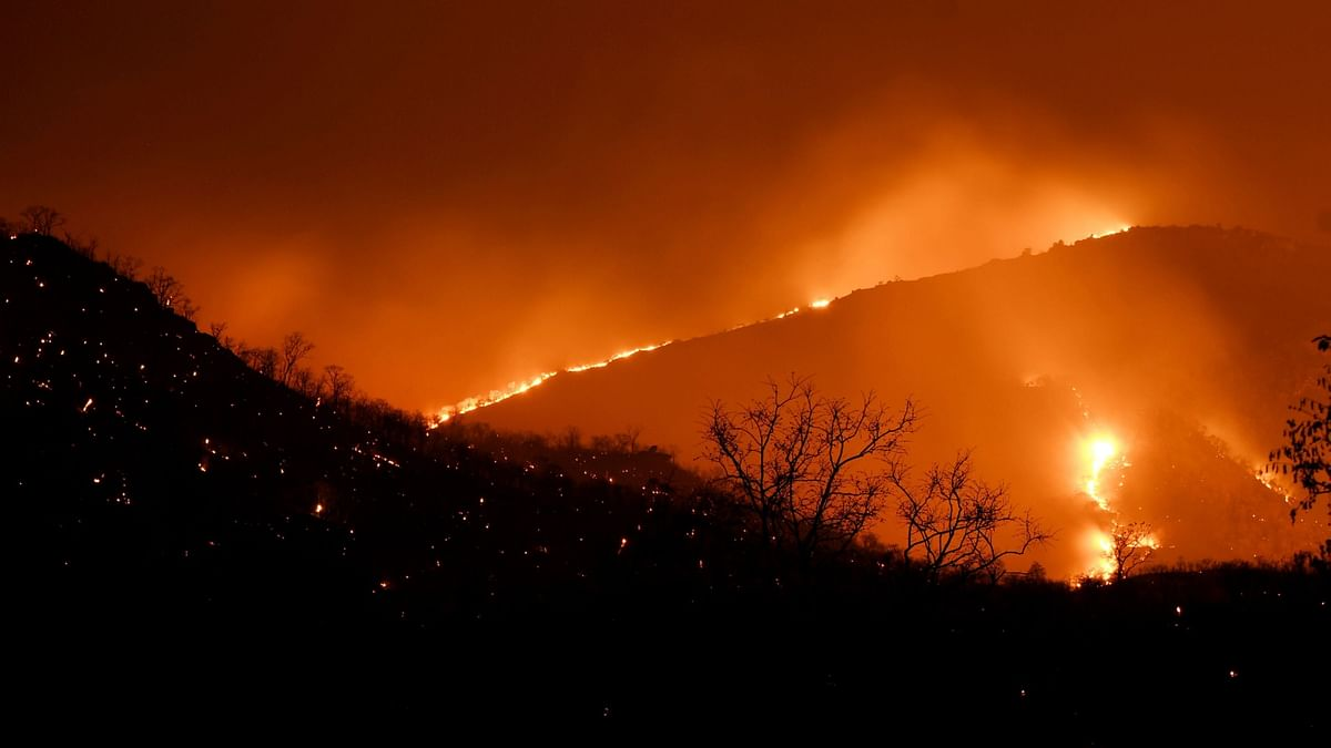 Mumbai Witnesses 1,110 Forest Fires Over Last 5 Years