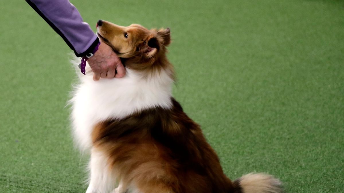 Man's Stressed Friend? Relax, For Dogs' Sake!