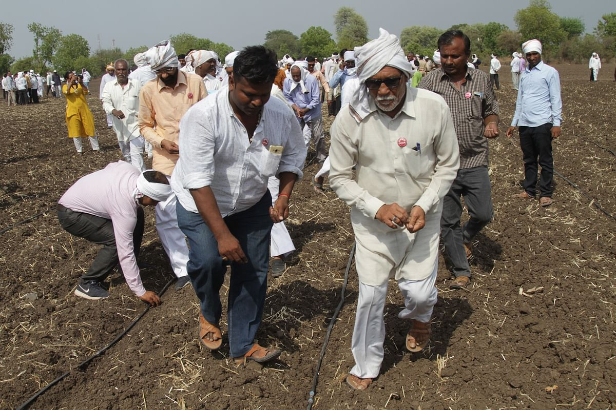 The surge to sow Ht cotton.