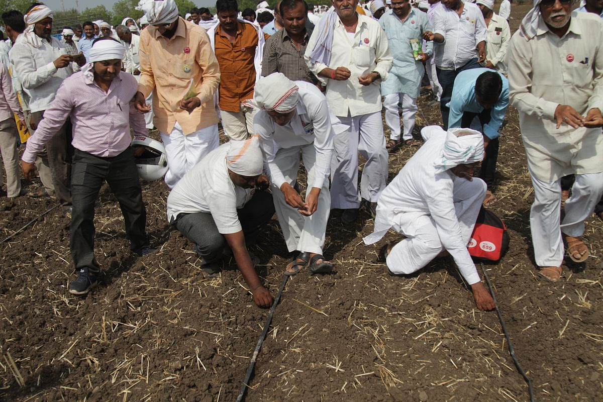 Sowing Ht cotton seed, defying the law.