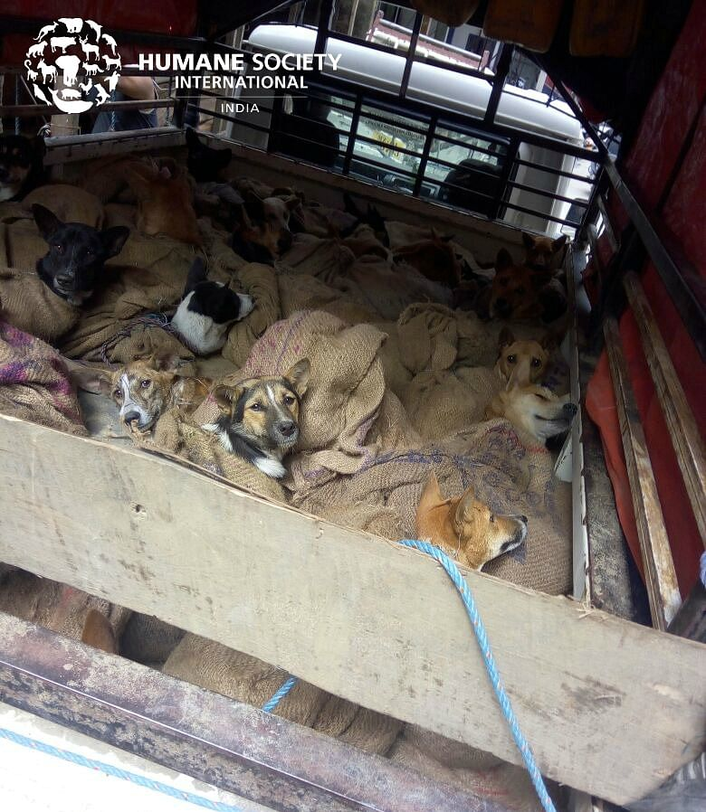 The dogs have been traumatised because of the abuse they had been through.
