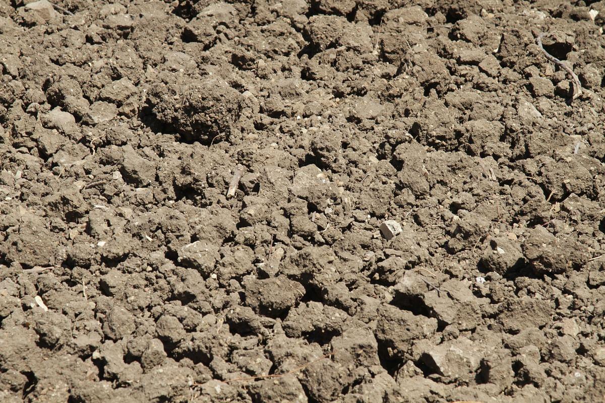 The soil of Dahankar's farm.