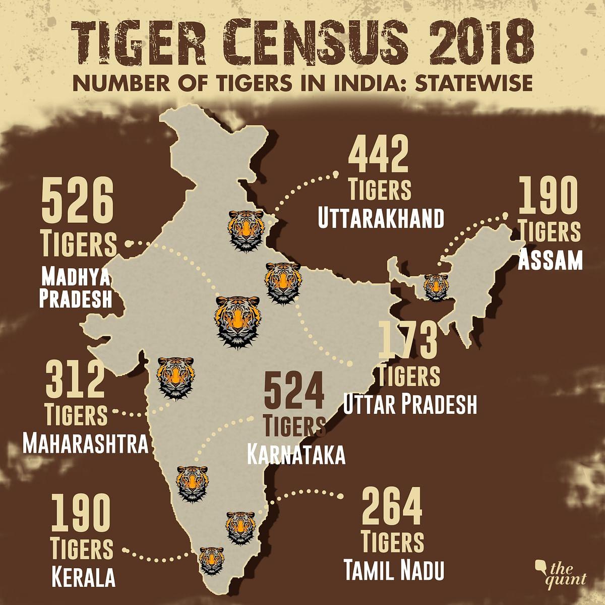 International Tiger Day: Tiger Population Rises to 2,967, Up 33%
