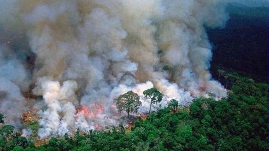 Amazon on Fire: 4 Essential Reads on Brazil's Vanishing Rainforest