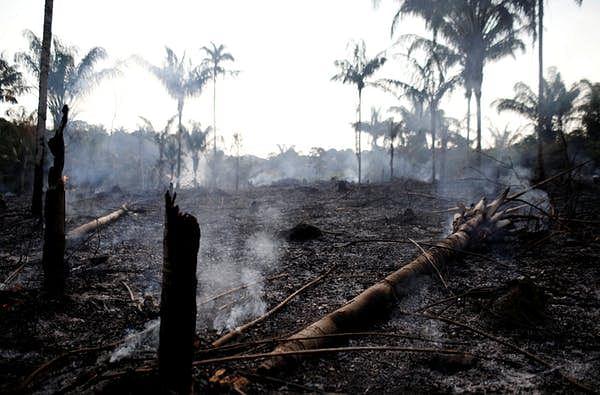 Amazon jungle recently burned by loggers and farmers in Iranduba, Amazonas state, Brazil, 20 August 2019.