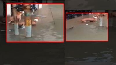 Video of crocodile on Vadodara street goes viral