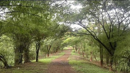 Aarey colony will lose 2,646 trees to the Metro car shed.