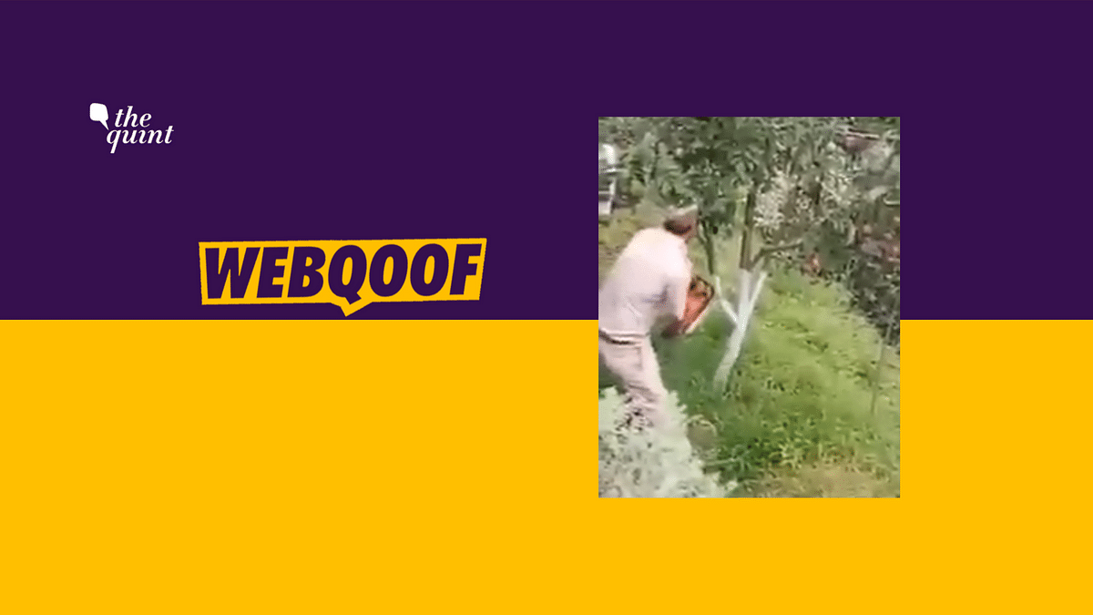 Old Video Passed off as Indian Soldiers Cutting Trees in Kashmir