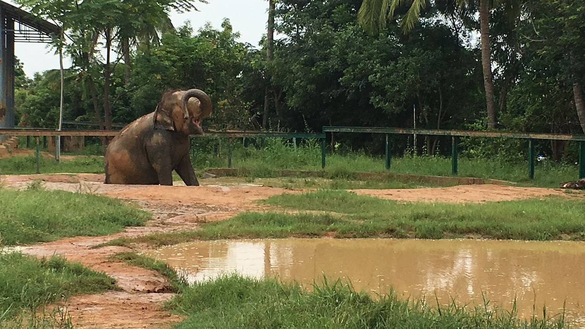 Jayanthi is having a happy time playing by the mud pool. Taken on 18 September 2019.