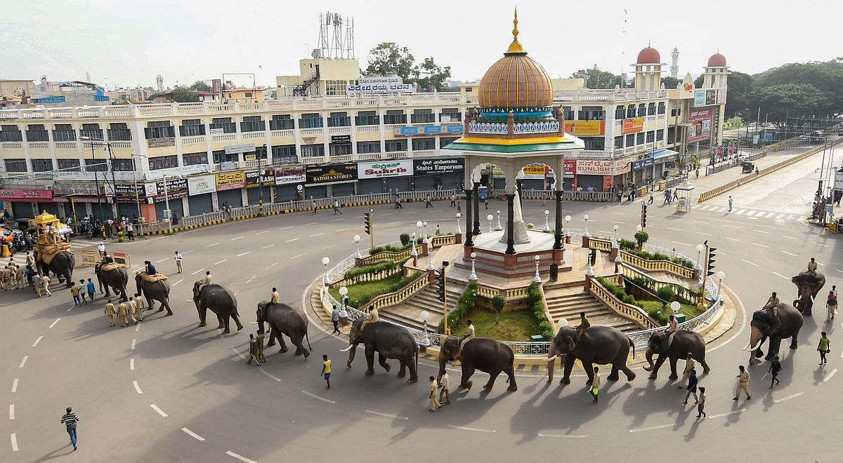 Dasara elephants are seen during a practice parade in Mysore city.