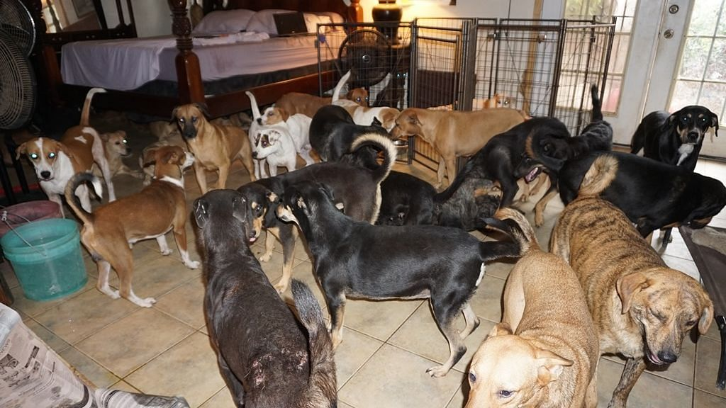 #GoodNews: Woman Shelters 97 Stray Dogs From Hurricane Dorian