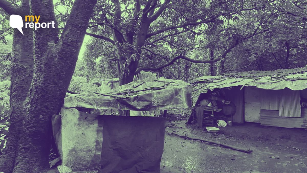 Aarey Forest's Adivasis Ask How They Will Survive Felling of Trees
