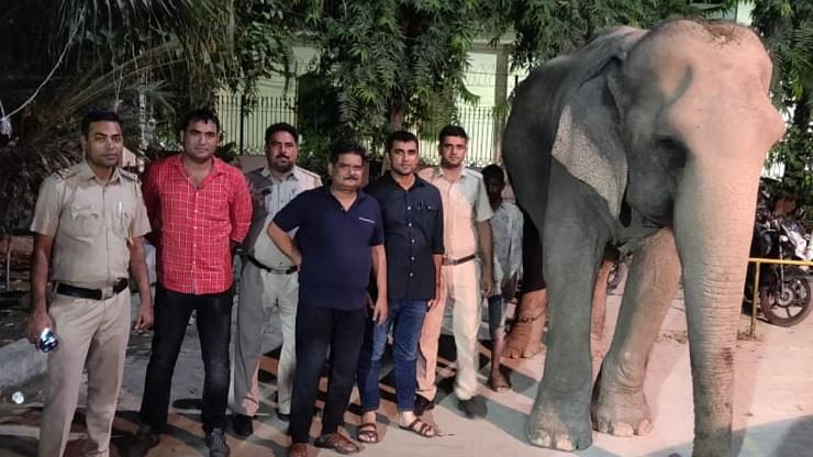 Delhi's Missing Elephant Laxmi Found After 2 Months, Mahout Held