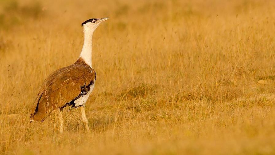 150 Animal Species May Go Extinct Due to Desertification: Research