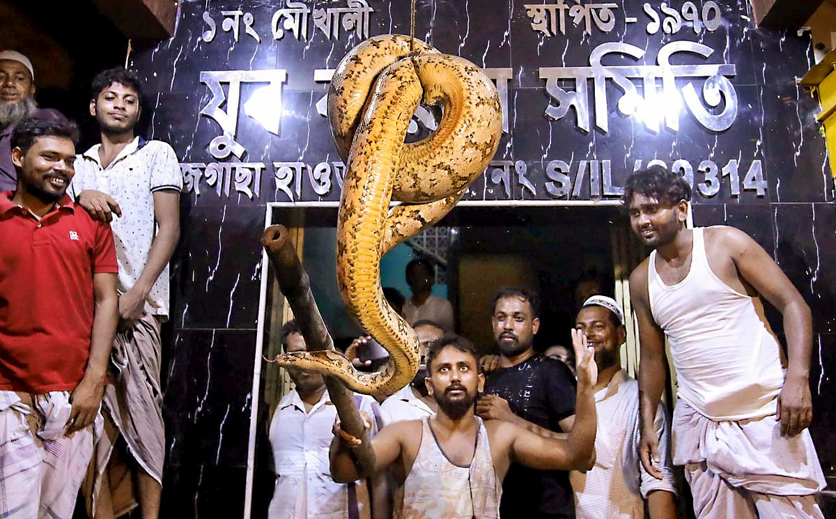 Residents show a rarte python, which was recovered from Jagacha Moukhali in Howrah, West Bengal.