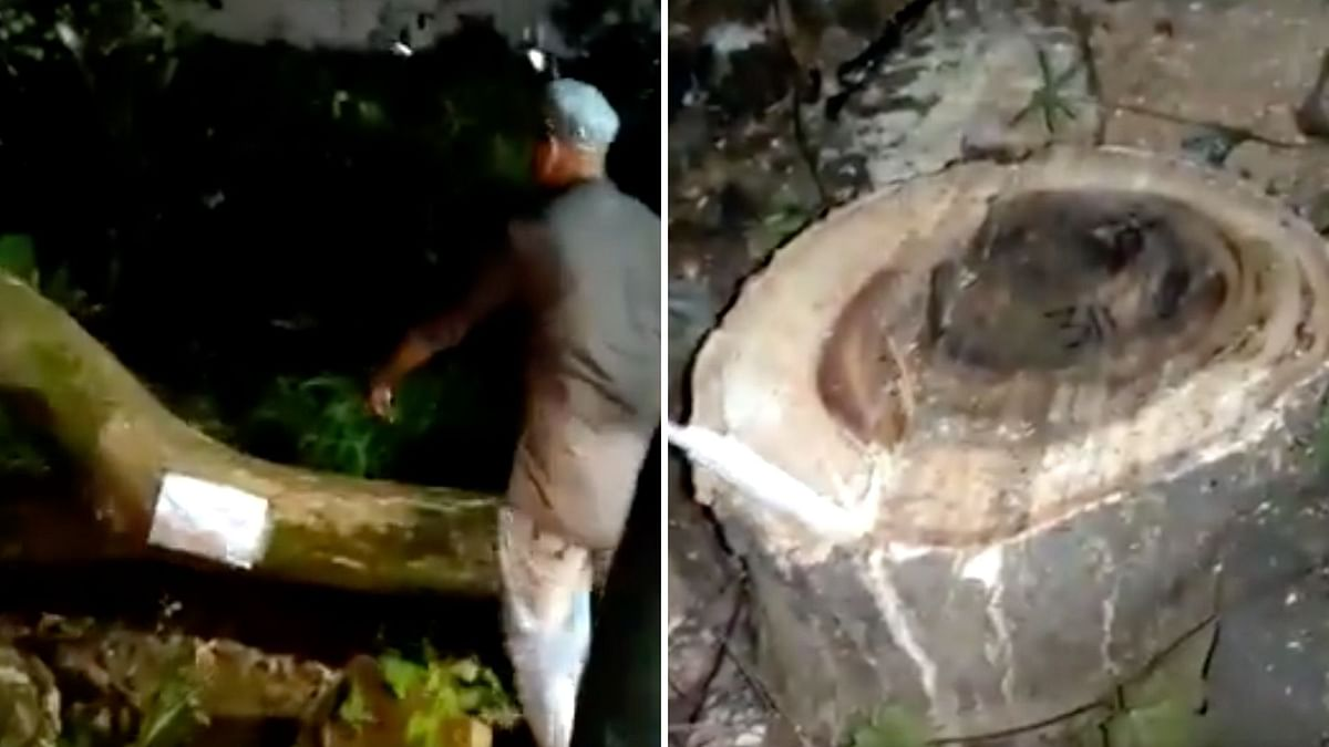 Aarey Tree-Felling: Activists Protest as Police Restrict Entry