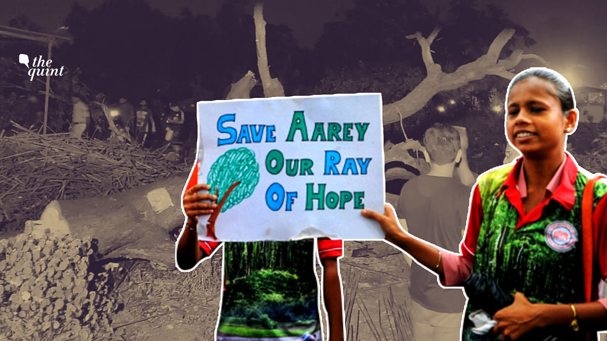 Bombay High Court dismissed all petitions against felling of over 2,600 trees in Aarey on Friday, 4 October. Image used for representation.