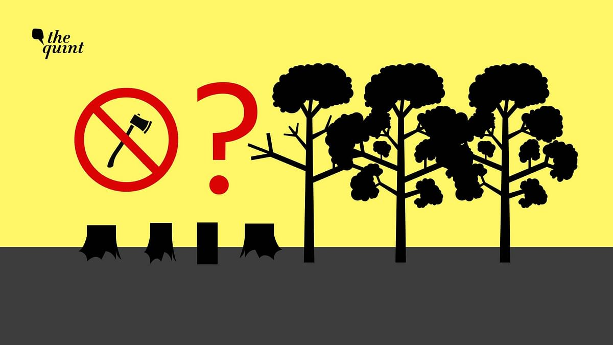 Can Anything Stop the Cutting of 800 Trees in Aarey Colony?