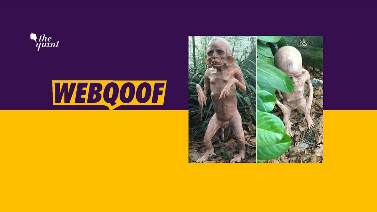 Alien Species in MP's Chitrakoot? No, It's a Silicone Sculpture