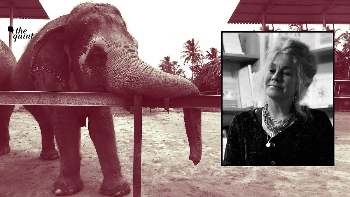 Brutal Seizure of 3 Elephants in TN  a Crime: Animal Psychologist