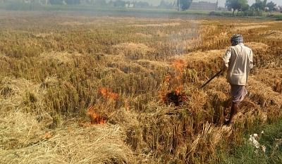 Amritsar: A farmer burns stubble after the harvest of paddy, at an agricultural field on the outskirts of Amritsar, on Oct 23, 2019. (Photo: IANS)