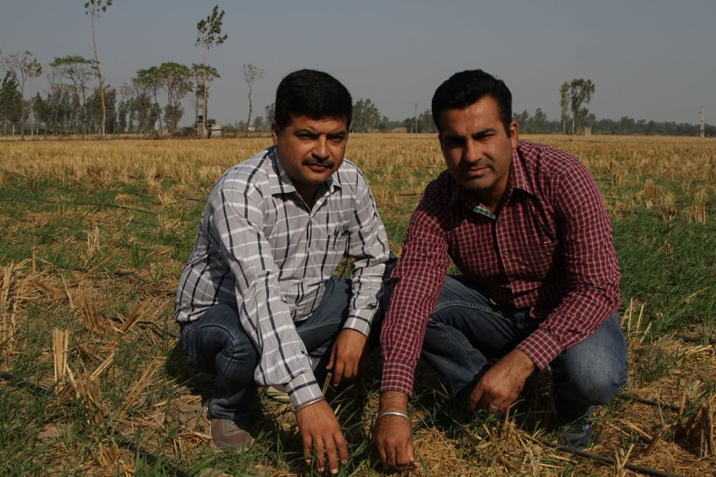 Manoj Kumar and Vikas Chaudhary in their field in Karnal.