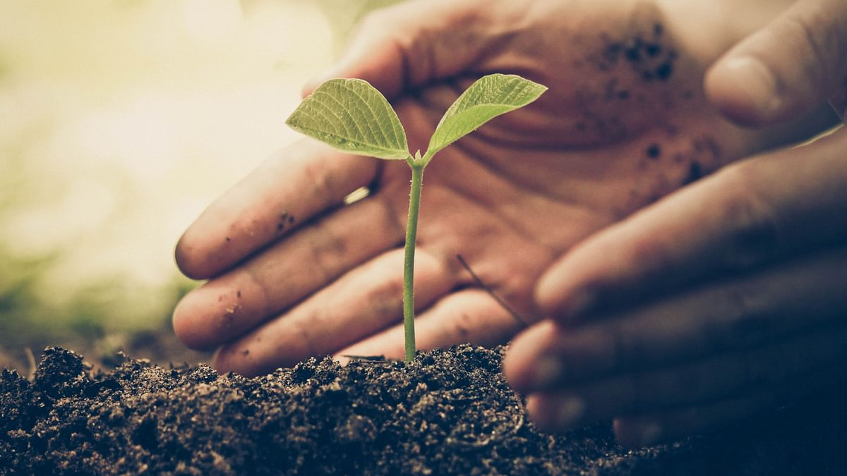 Plants Better Than Tech for Reducing Air Pollution: Study