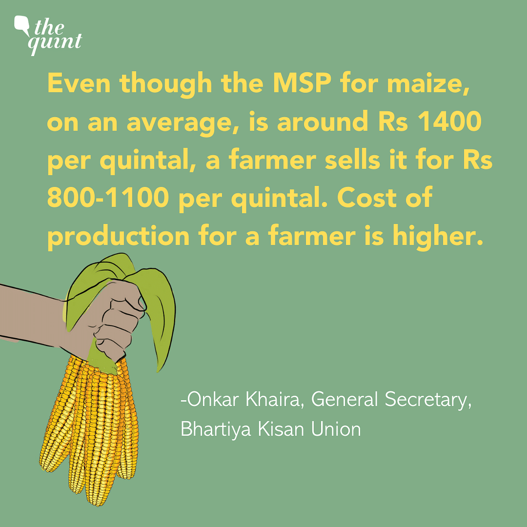Delhi Pollution: Forcing Farmers To Grow Maize Is Not A Solution