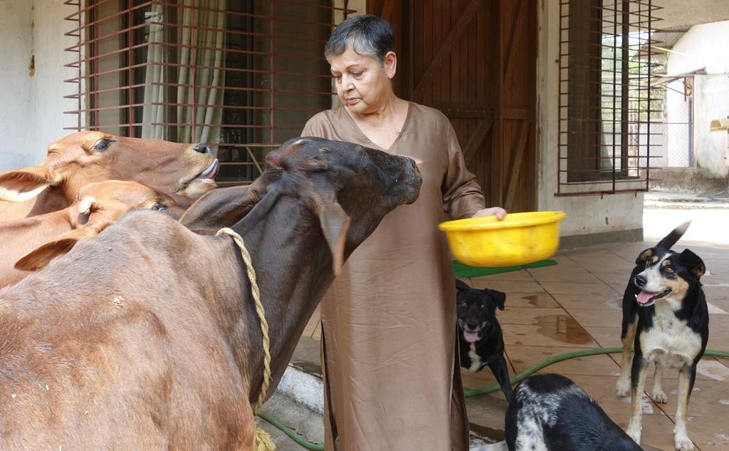 Raakhee with her pet cows and dogs at her Panvel farmhouse.