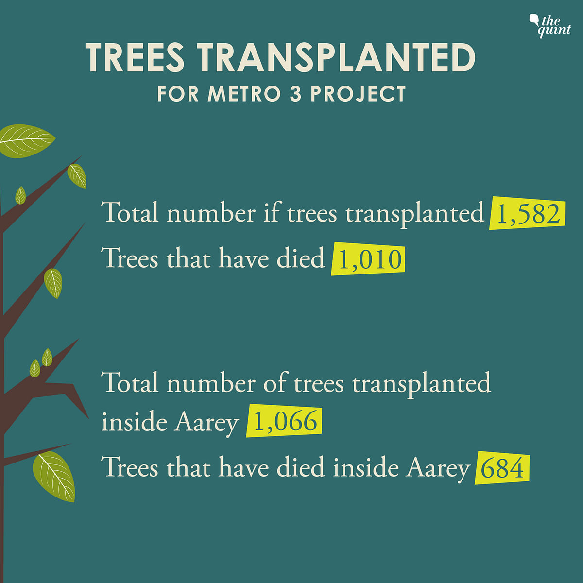 684 of the 1,066 transplanted trees inside the Aarey Milk Colony, for the Metro 3 project, have already died.