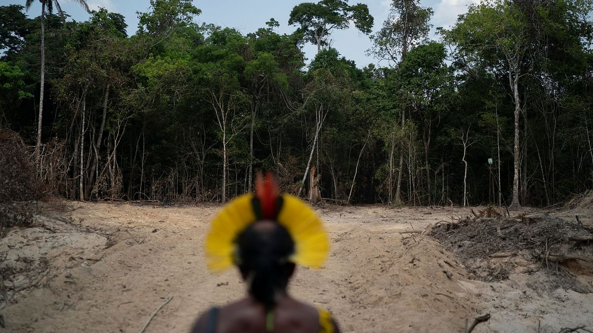 Brazil Says Amazon Deforestation At Its Worst Since 2008