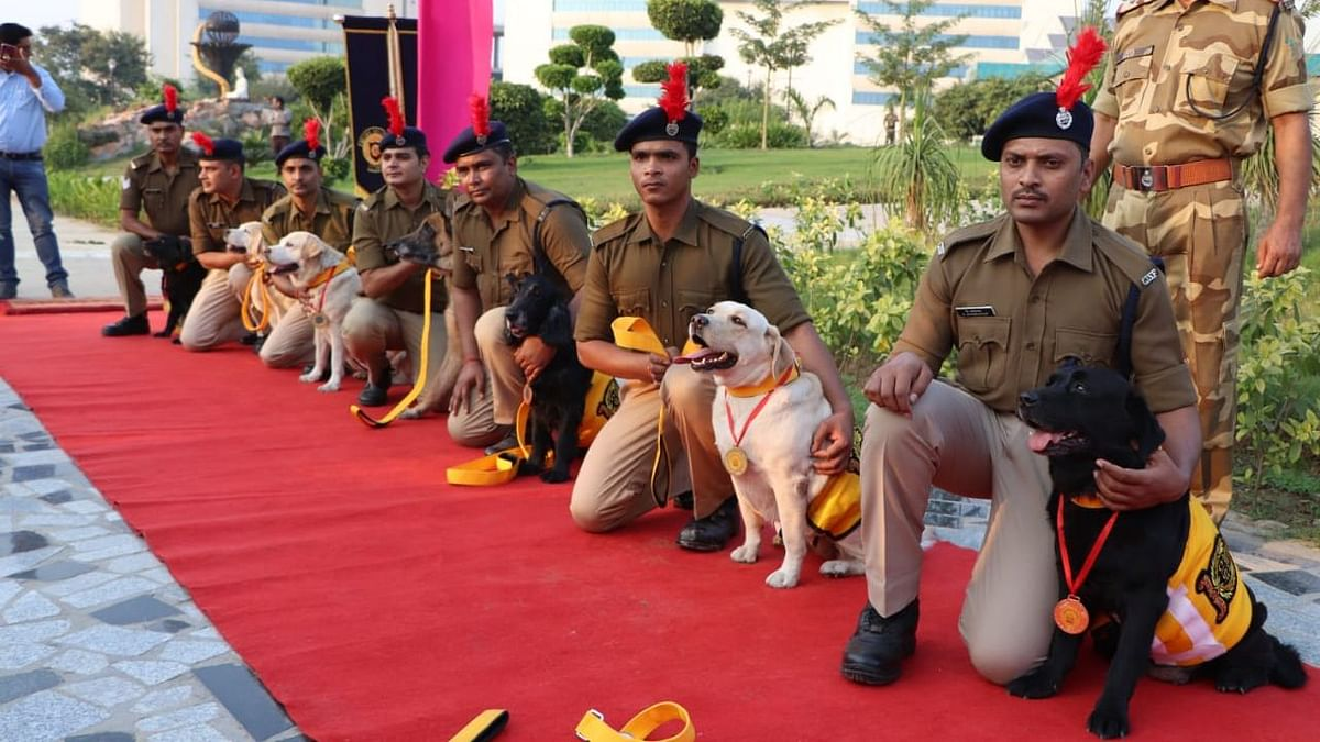 A special farewell was accorded to them by troops in uniform who lined up to salute the four-legged soldiers as they took their last walk in the camp.