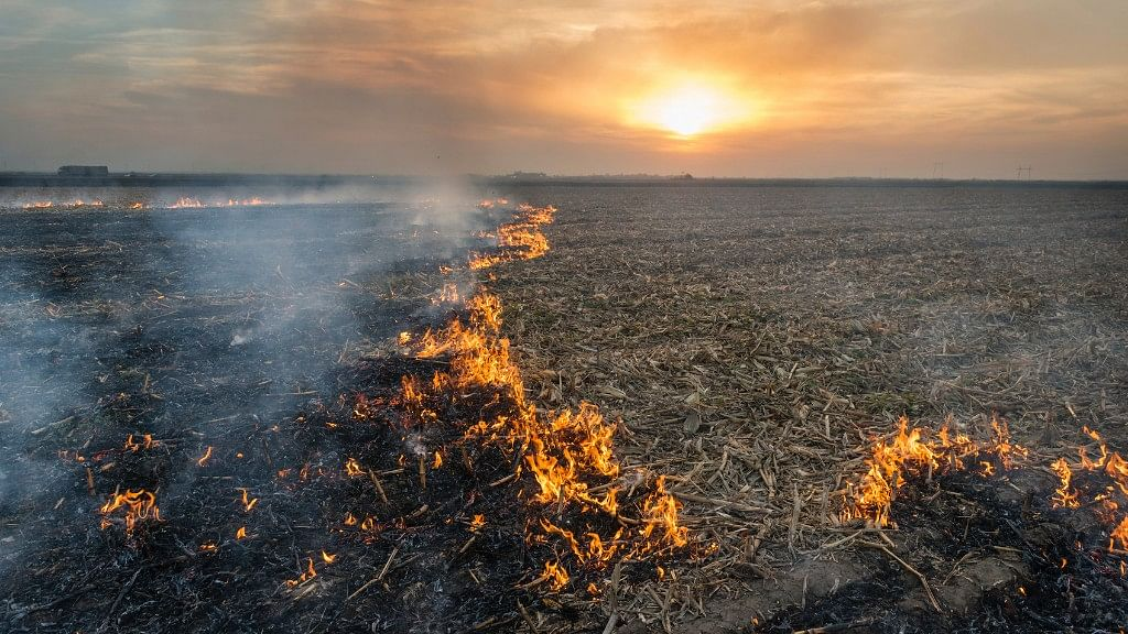 Is Stubble Burning Avoidable? Odisha Has the Answer