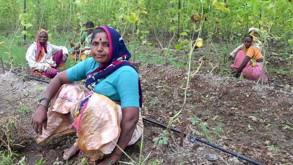 Women farmers like Usha Pade have led from the front to adopt organic farming practices