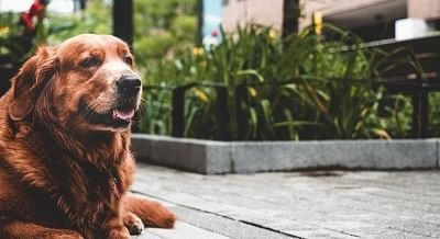Caring tips for senior pets