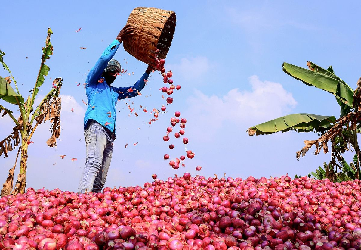 A worker winnows onions with a basket before transporting them to a market, at Undavali in Guntur district of Andhra Pradesh on Monday, 23 December.