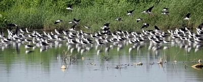 Caged migratory birds seized in Assam village