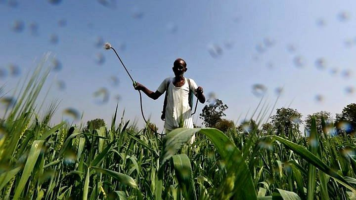 A farmer sprays a mixture of fertiliser and pesticide onto his wheat crop on the outskirts of Ahmedabad. Image used for representational purposes.