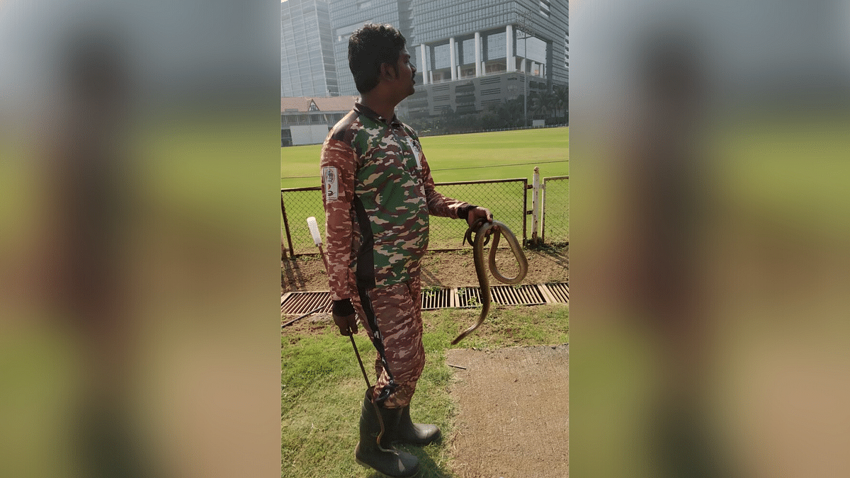 The Ranji Trophy match between Mumbai and Karnataka was stopped twice due to snakes in the ground.
