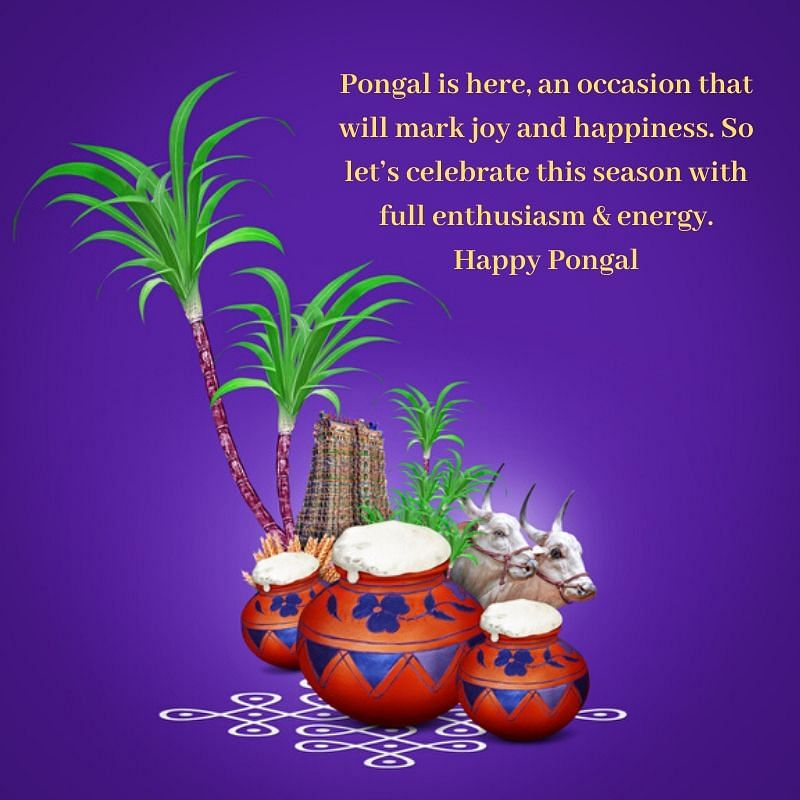 Pongal 2020 Wishes in English