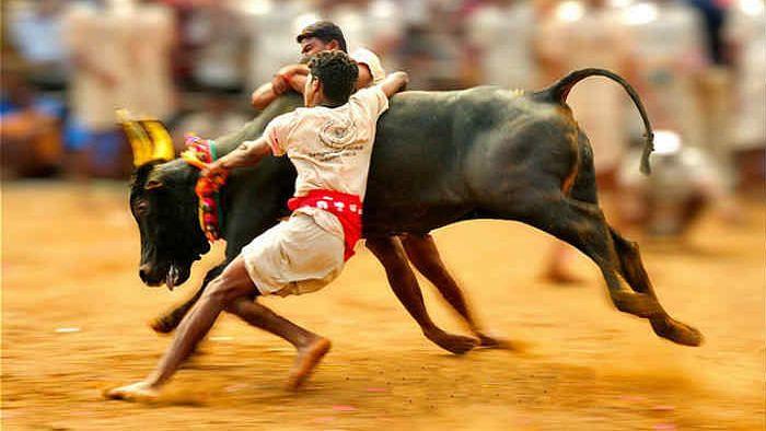 Jallikattu: The Race Begins at Palamedu
