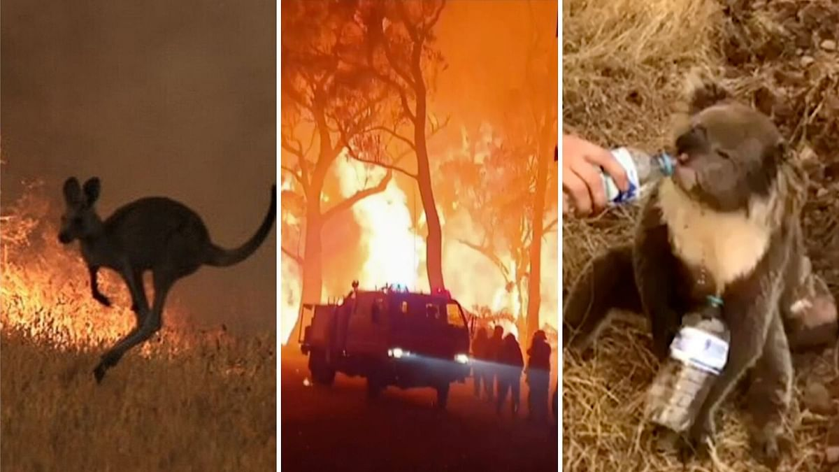 Australia Wildfires: The Disaster That Has Left Thousands Homeless