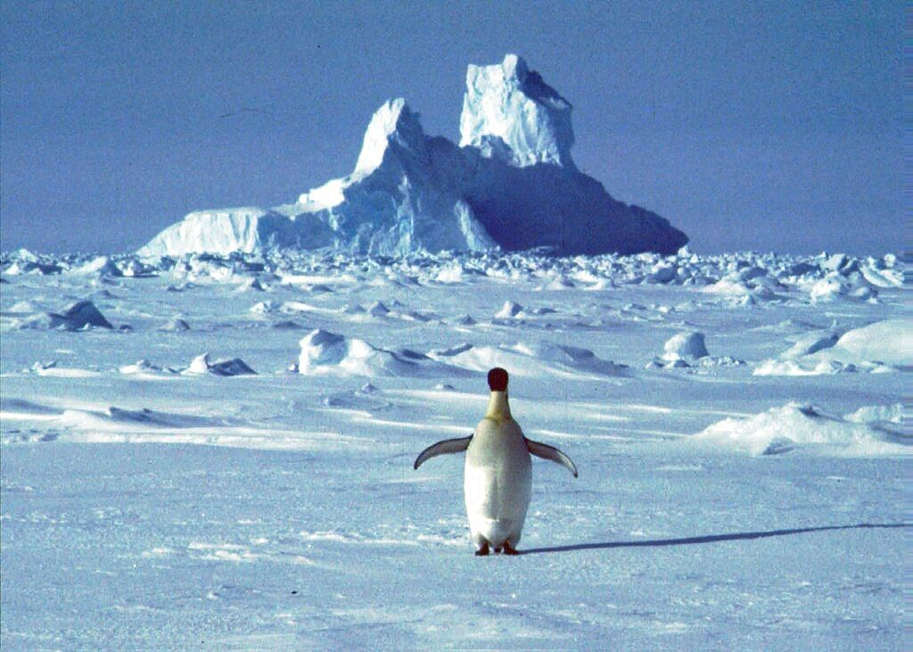 In this undated file photo, a lonely penguin walks in Antarctica during the southern hemisphere's summer season.