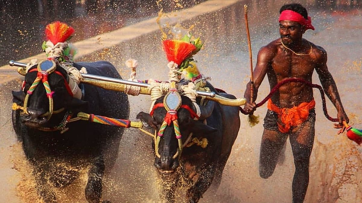 Fastest Kambala Jockey or Indian Usain Bolt? A Look at the Facts