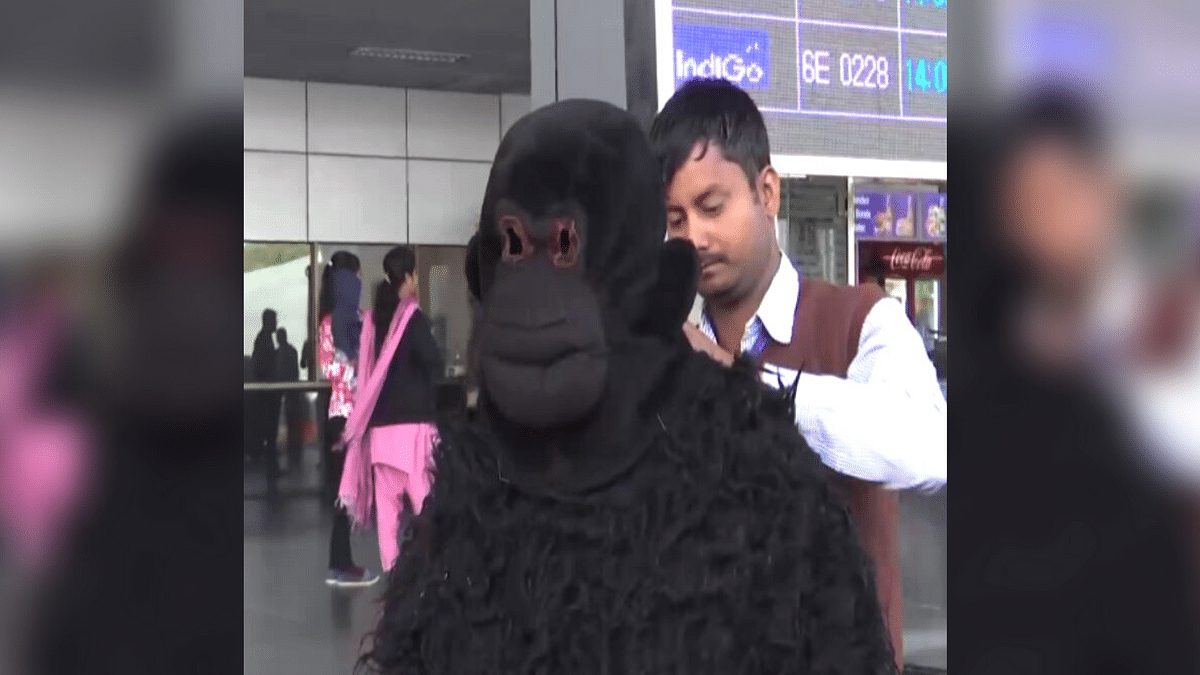 Ahmedabad Airport Employee Dons Bear Costume to Chase Away Langurs