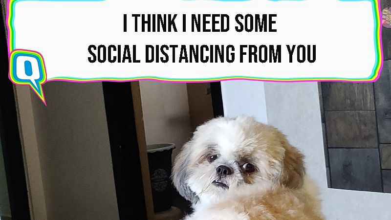 8 Honest Thoughts My Dog Had While I Was Working From Home