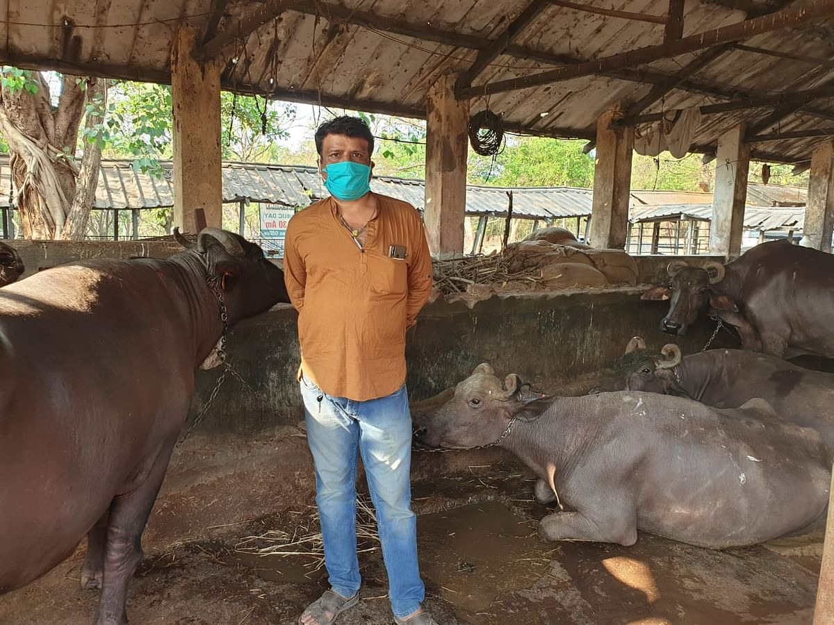 Dairy farm owner Sunil Mishra has run out of cattle feed for his animals.