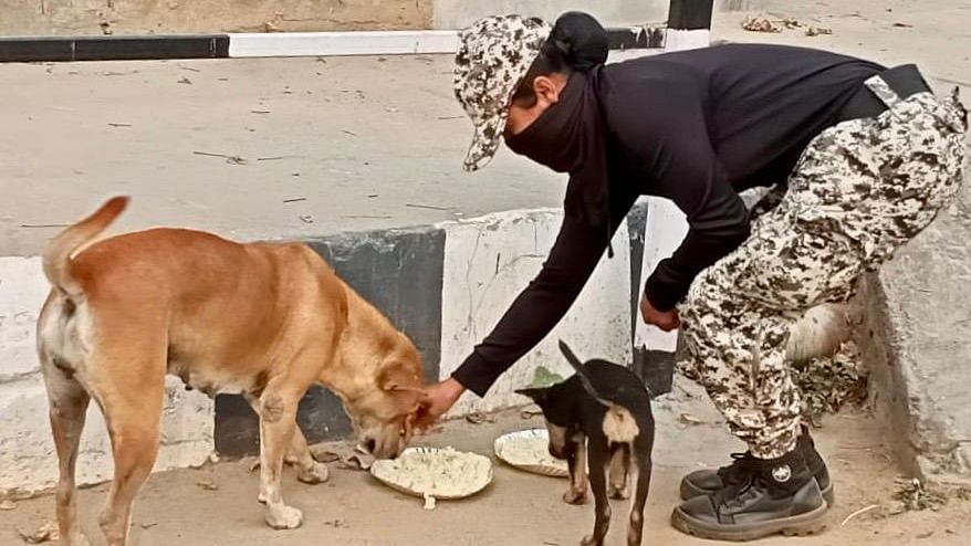 Amid Lockdown, Some Good 'Hoomans' Tend to Stray Animals